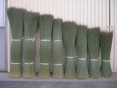 い草の「長さ」